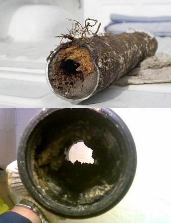 Засоры образуются из остатков пищи и твердых частиц органики